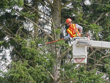 Contract worker trimming tree branches away from power lines